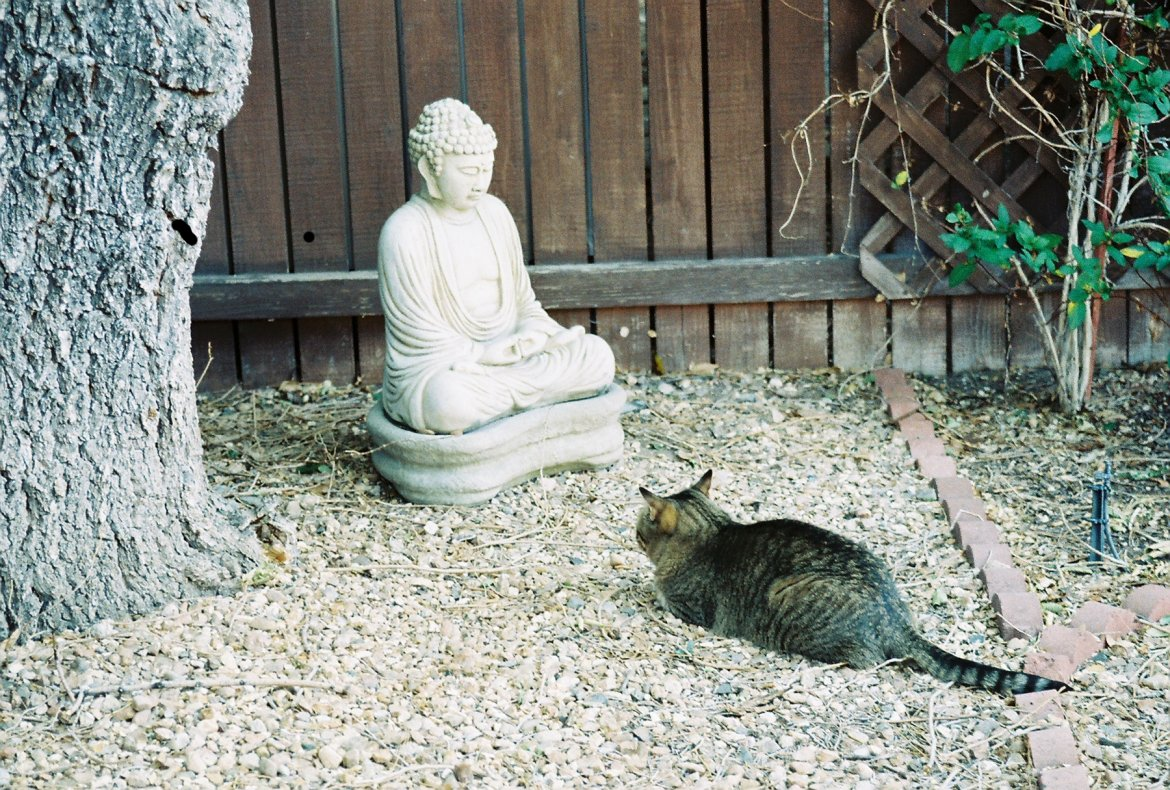 Does a cat
